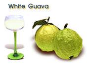 White Guava (Glohmsahlee)