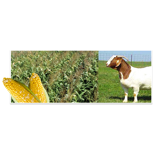 Feed: Livestock - Cattle Feed Group