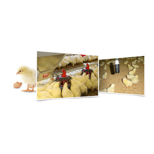Feed: Livestock - Broiler Feed Group