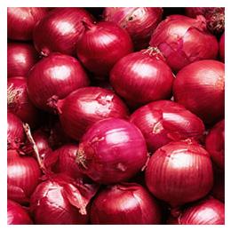 Fresh onion3