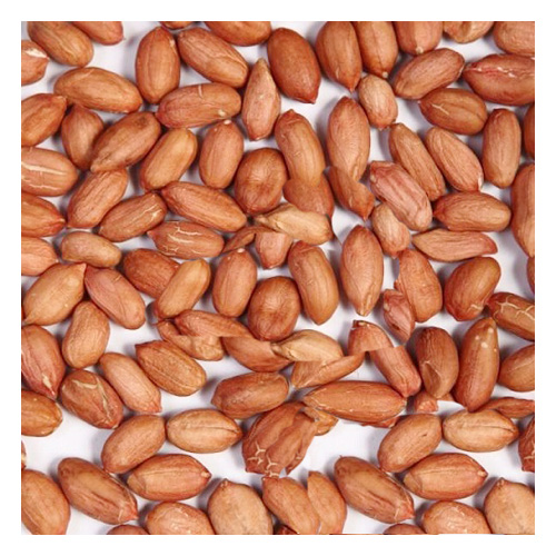 Traditional Type Peanut Kernels Long Shape