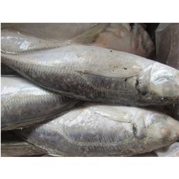 Best Fish Price Frozen Horse Mackerel