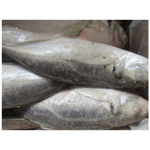 Best Fish Price Frozen Horse Mackerel