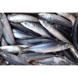 sea frozen mackerel