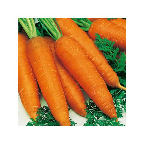 Orange Red Fresh Carrot