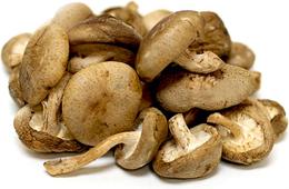 Eight Colors Shiitake Mushrooms