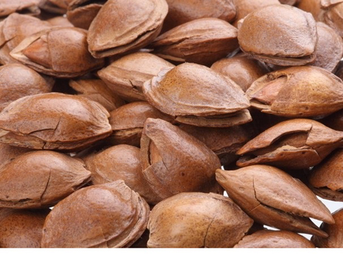Almond/apricot kernel