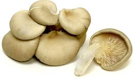Canned abalone mushroom