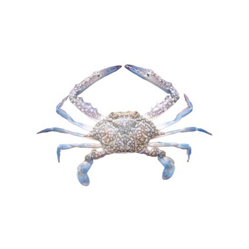 Crab (Blue)