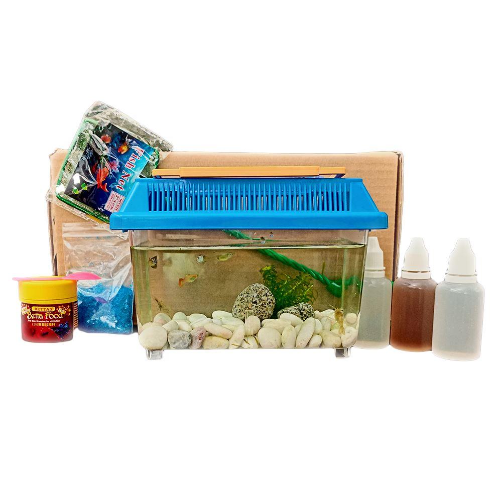 My first fish box - [educational kids]
