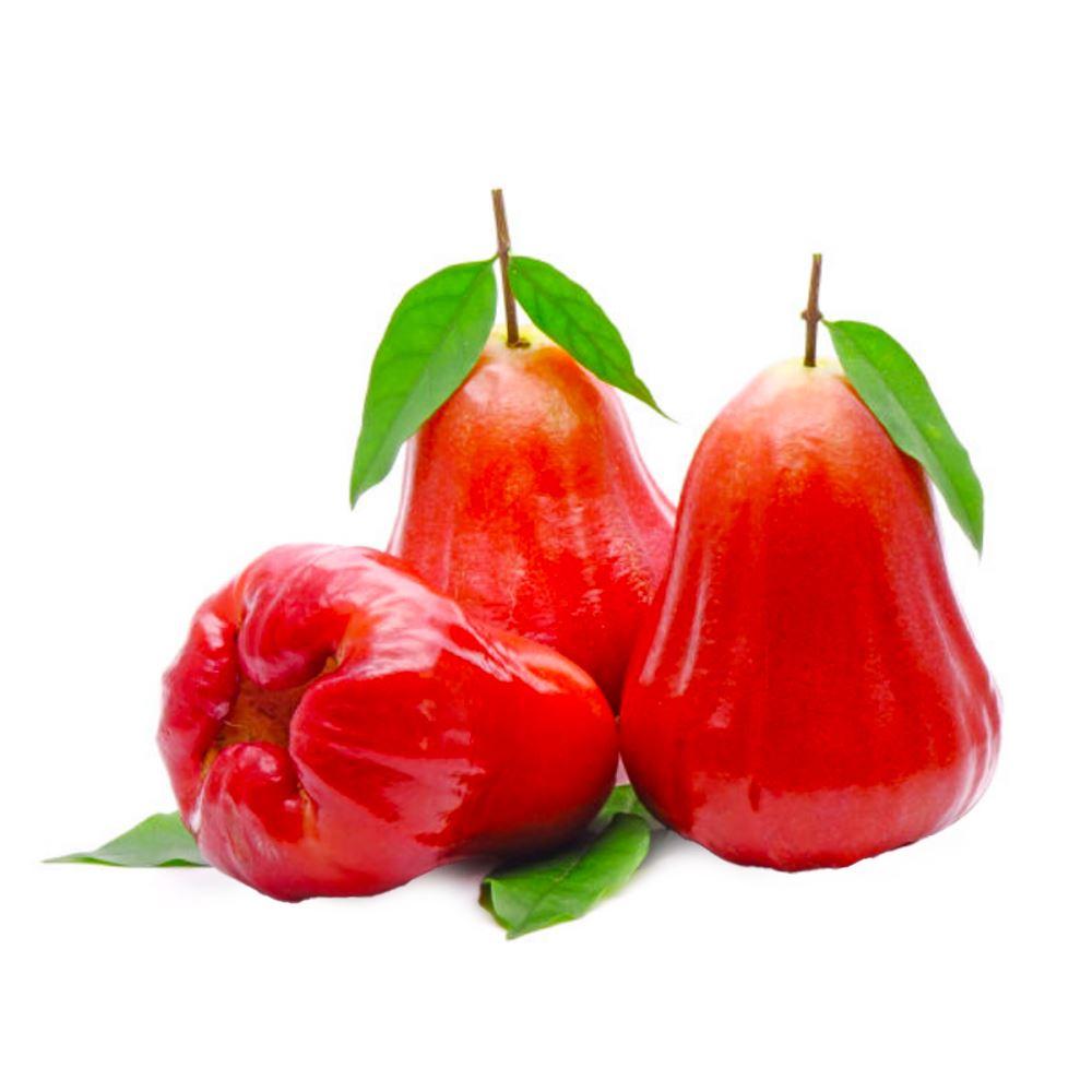 Jambu Air (Watery Rose Apple)